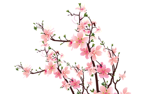 kisspng-common-plum-plum-blossom-pink-fl