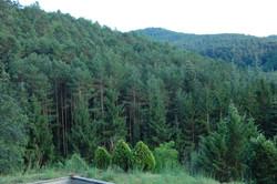 El nostre bosc