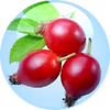 Rosehip-Fruit-Oil-18.01.2016-150x150.png
