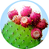 prickly pear .png