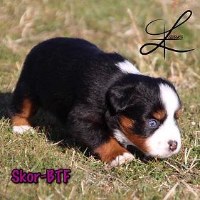 skor puppy photo.JPG