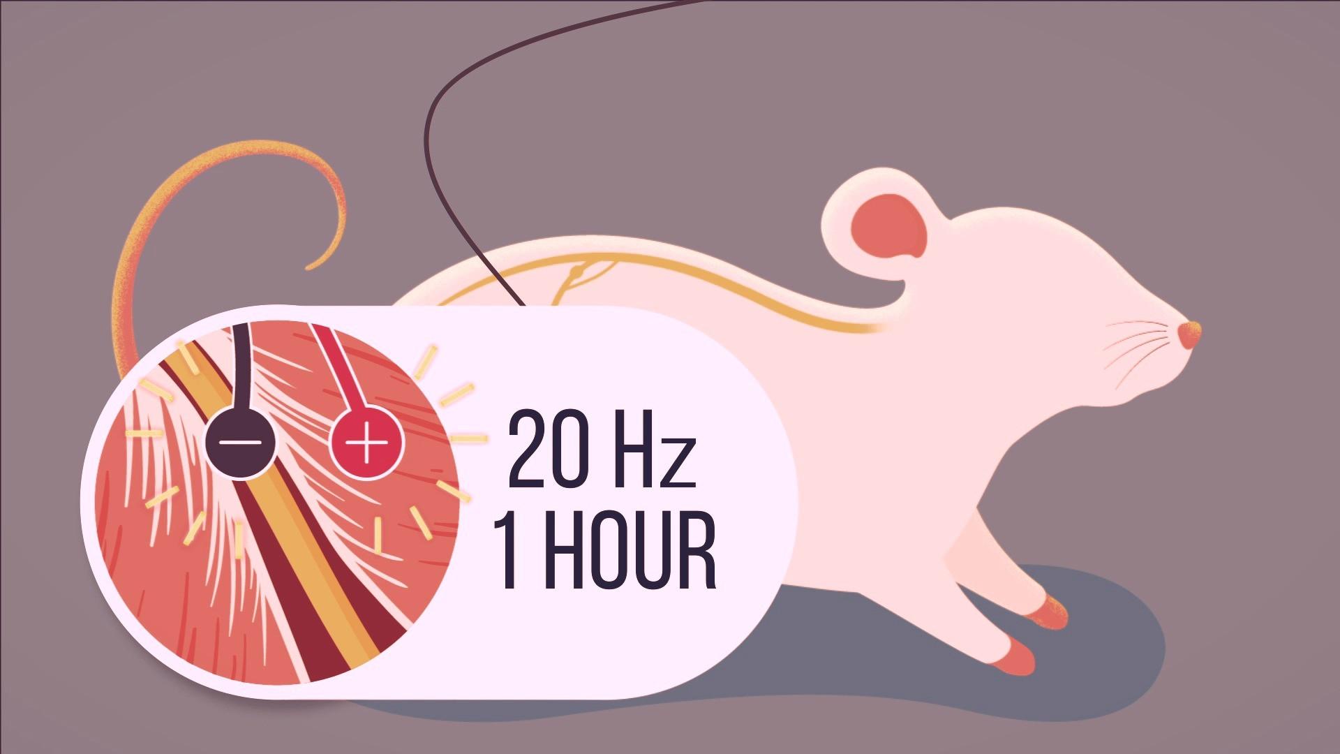 2D Medical Animation 메디컬 애니메이션 의학 바이오 3D 영상