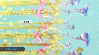 Medical Animation 메디컬 일러스트 의학 일러스트레이션