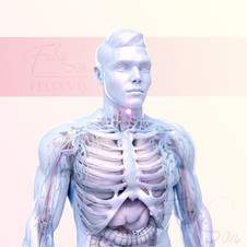 3D Male anatomical structure