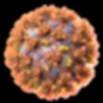 Coronavirus_felixvis_2020_1080hd_2-2.png