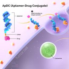Medical illustration | Mechanism of Aptamer-Drug Conjugate