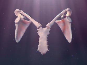 Angelic Scapula