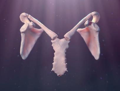 Medical illustration | Angelic Scapula