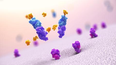 Medical animation still | Protein pinocytosis