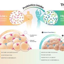 Medical illustration | The benefit of probiotics