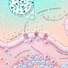 Medical illustration | Microbiome