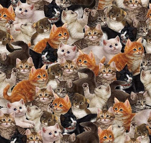 Literary Kitties Packed Kitties - Multi