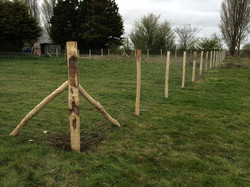 Agricultural Fencing Kent
