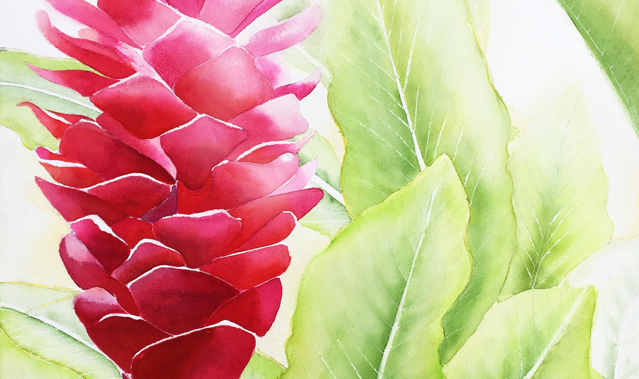 Hawaii Torch Ginger.jpg