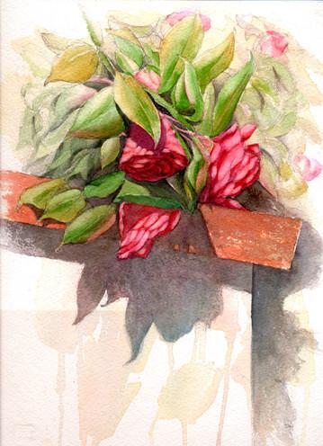 Camillia Flowers.jpeg