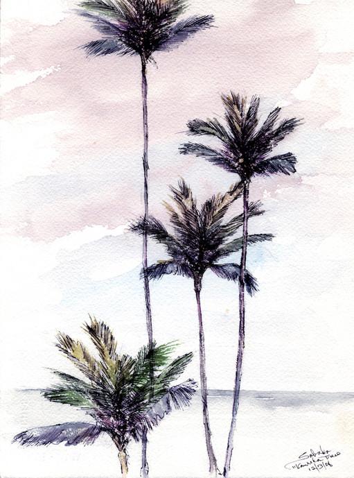 Kanaha Coconut Trees
