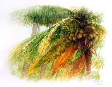 Coconut Tree.jpeg
