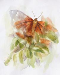 3B-10 Kamehameha Butterfly _Pulelehua_ .jpg