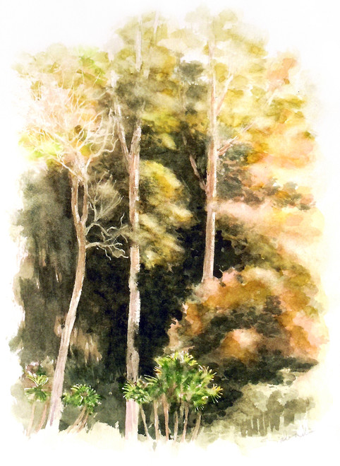 Koa Forest