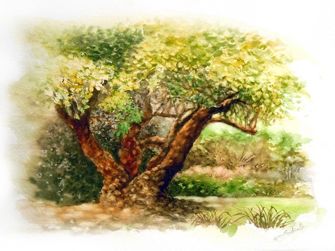 Hau Tree