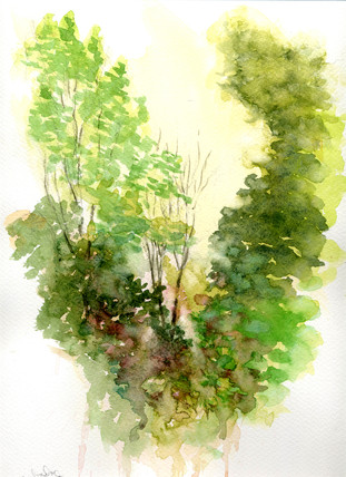 Tree Wonder