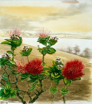 Ohia Flowers_Watercolor.jpeg
