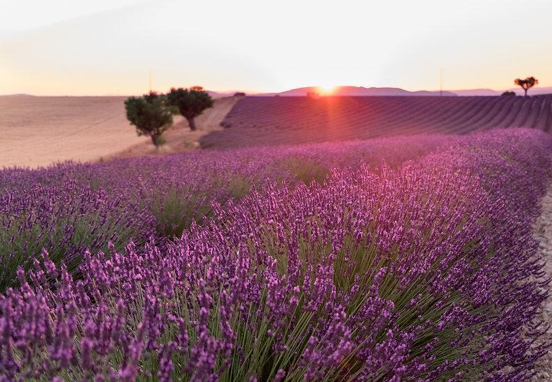 Contact SECRET Provence