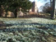 Kiplin hall snowdrops