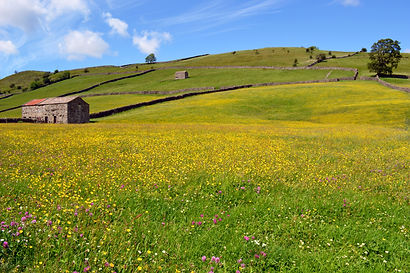 Flower meadows