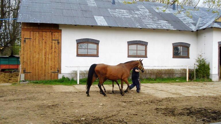 Stadnina koni w Łopusznej