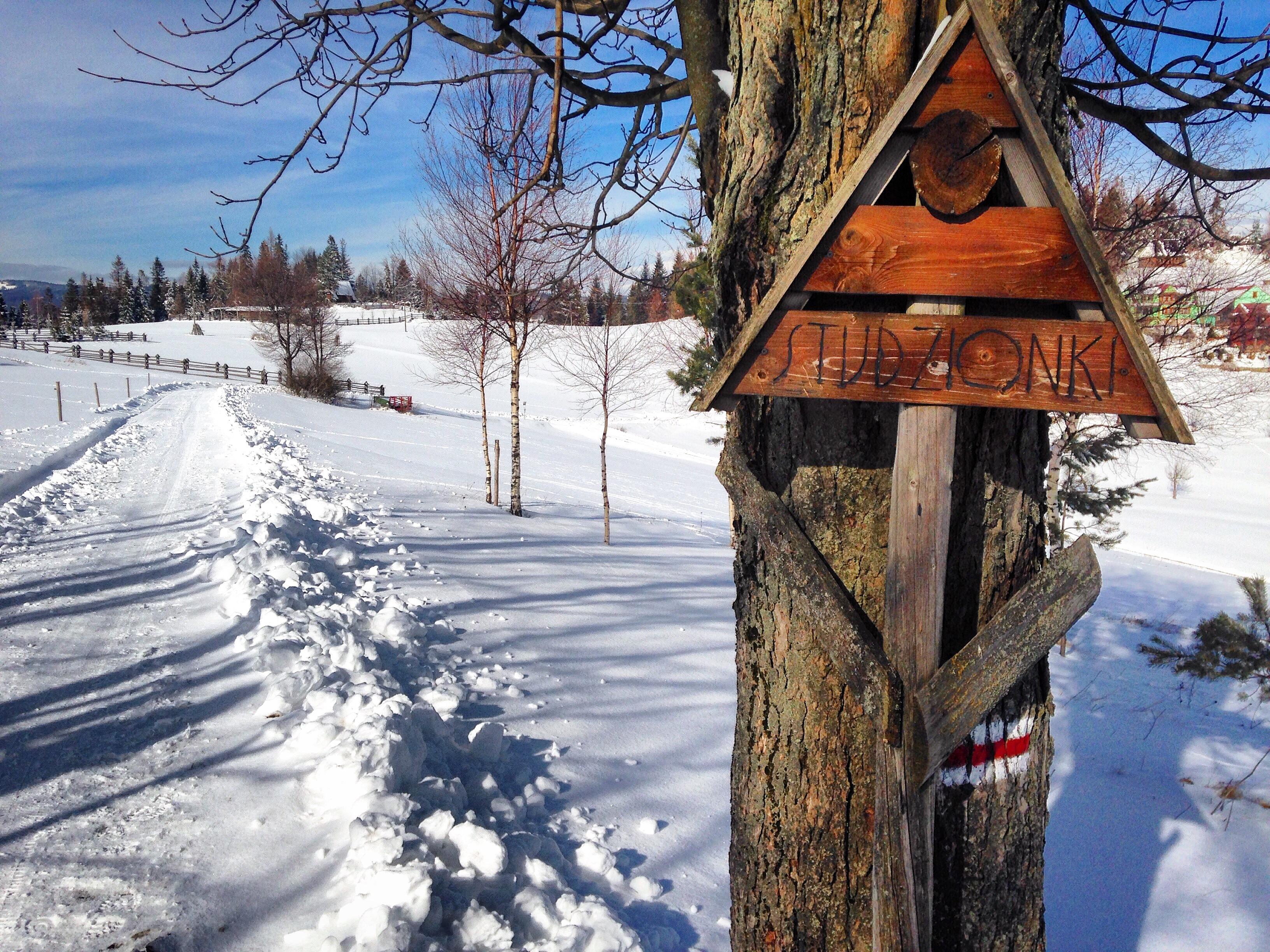 droga do osady Studzionki