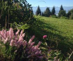 Nasza łąka z widokiem na Tatry