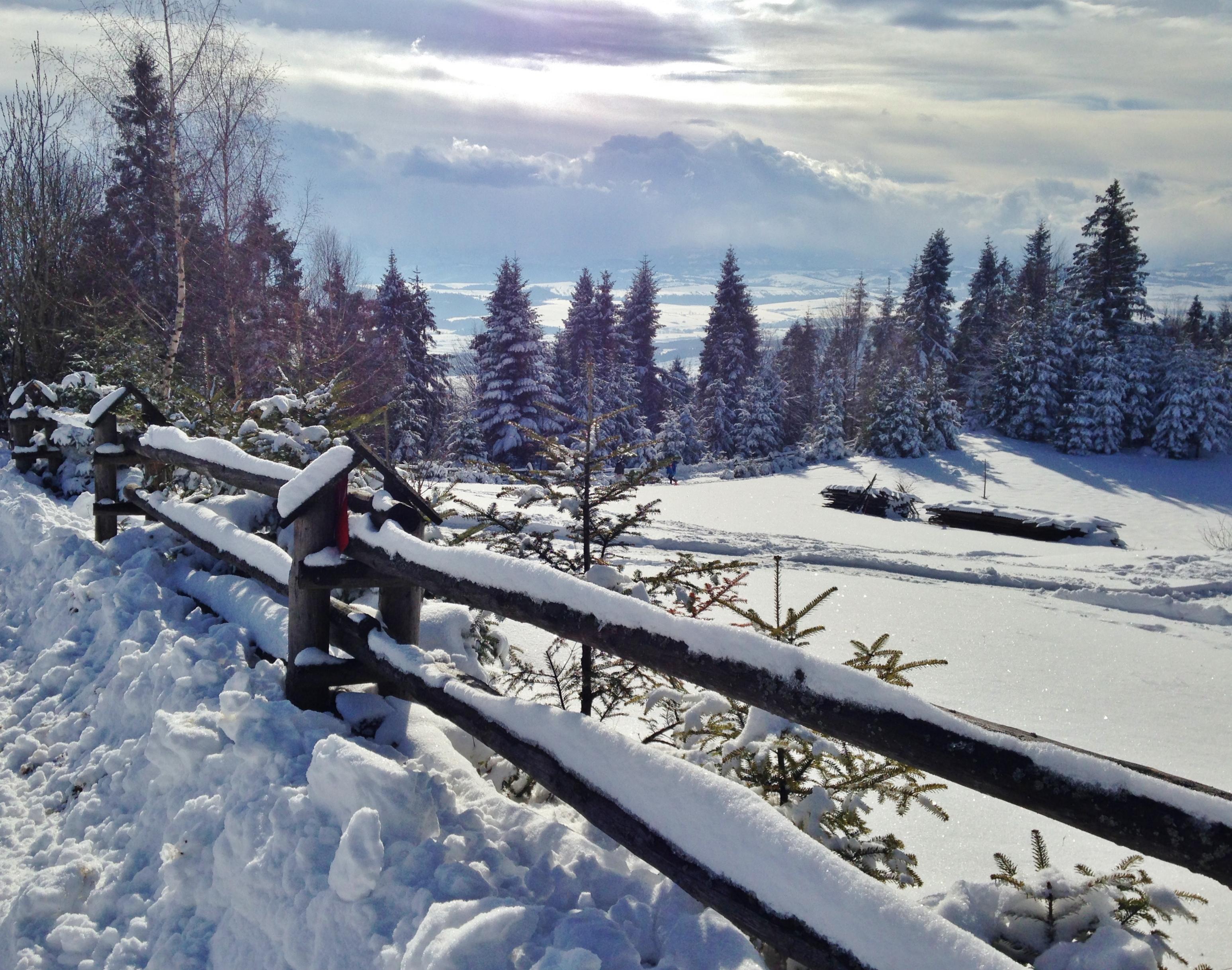 Nasza polana zimową porą