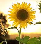 pexels-pixabay-33044_edited.jpg
