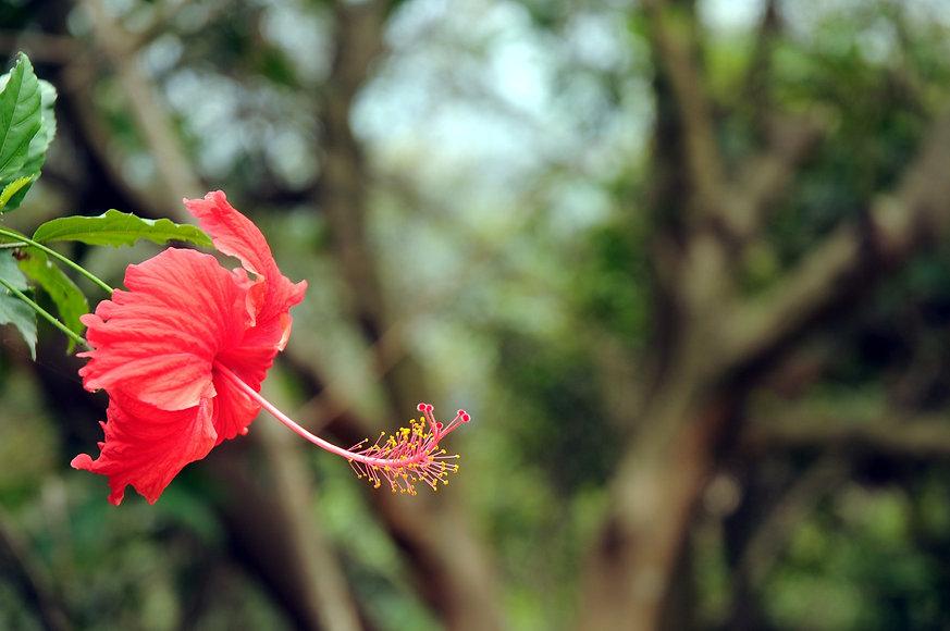 red%20flower_edited.jpg