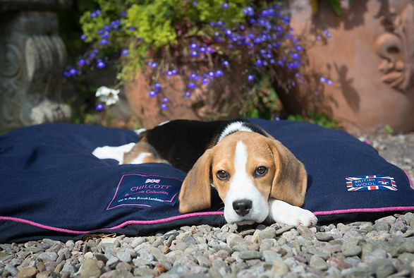Copy of Alison White Photo Dog Bed.jpg