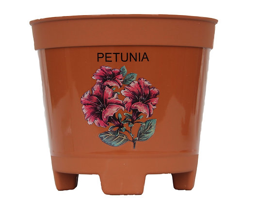 """8"""" Petunia 3-Qt"""