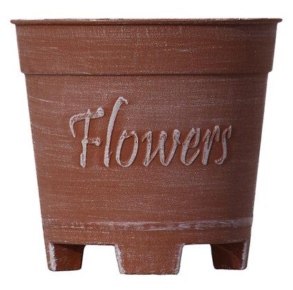 """6"""" Flowers 0.5-Gal"""