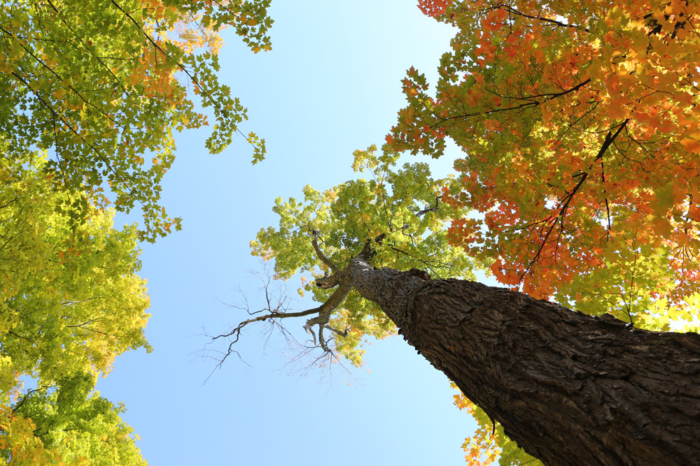 2014-10-Life-of-Pix-free-stock-photos-trees-autumn-leaves-sky-leeroy.jpg