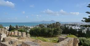 Tunisie - Les oliviers dans le paysage