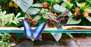 «Papillons en liberté», au Jardin botanique de Montréal, jusqu'au 28 avril 2019.