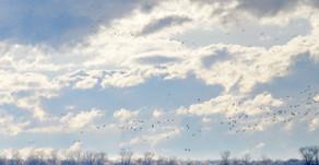 Le Québec est aux oiseaux