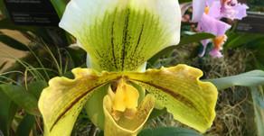 Le Jardin botanique de Montréal exhibe ses orchidées en fleurs