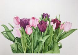Brenda W tulips