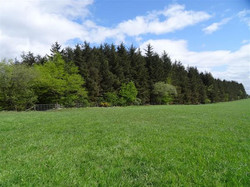 4.07 acres, Woodland for Sale Rigghe