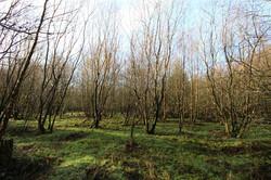 20.5 acres, Kirkhirst Plantation, Lo