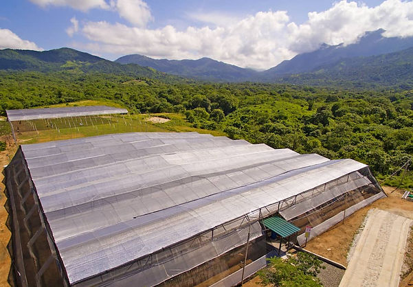 COLOMBIA GROW.jpg