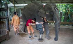 Mosha the Elephant