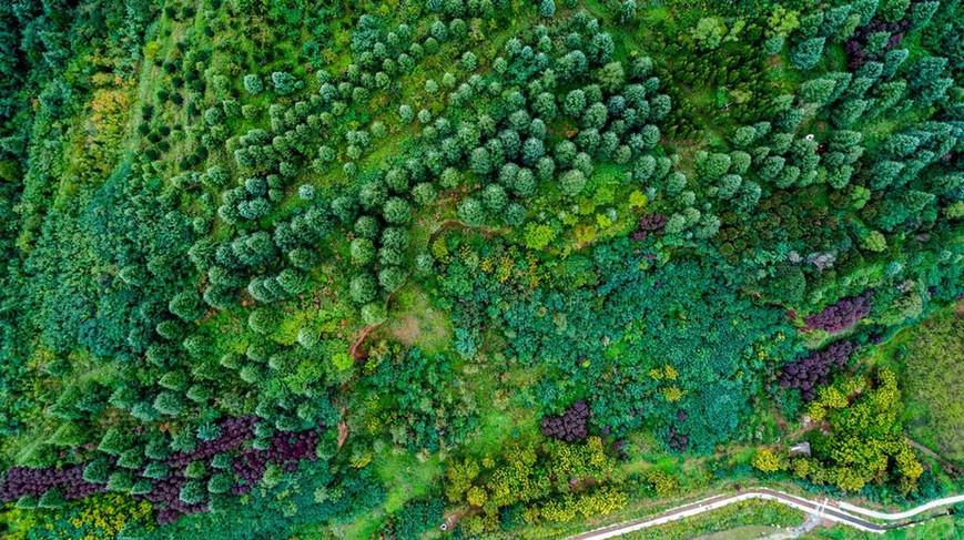 秦岭植物园生态绿
