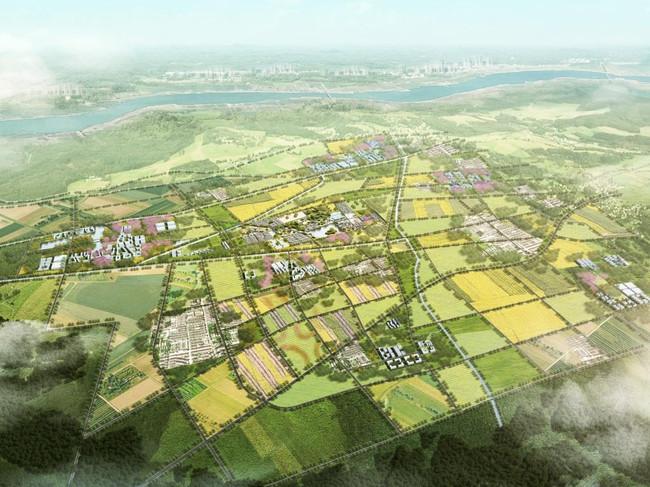 原阳水牛稻国际公社总体规划